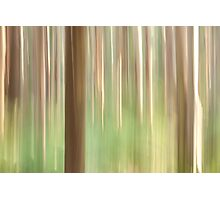 Painting the Forest Photographic Print