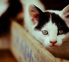 Kitten by joanne church