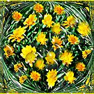 Bubbling Daisies by Margaret Stevens