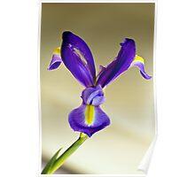 Layered Tulip 20110515 0000 Iris Poster