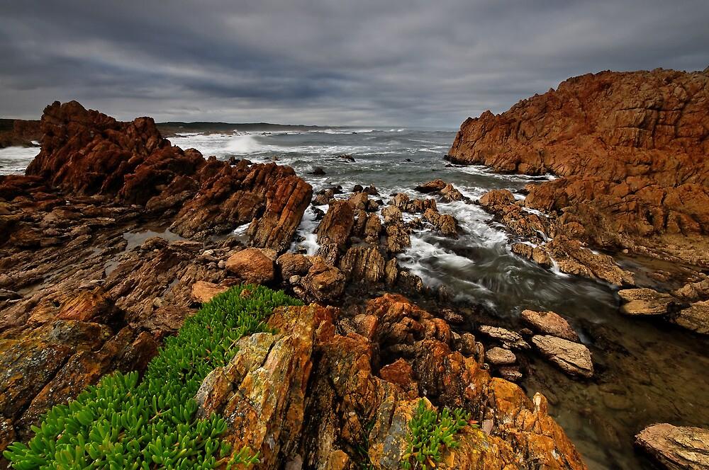 Rough as Guts Tarkine Coast by Robert Mullner
