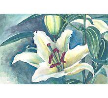 White lilium Photographic Print