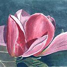 Magnolia by acquart
