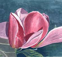 Magnolia by acquart