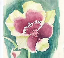Flower of Miltonia by acquart