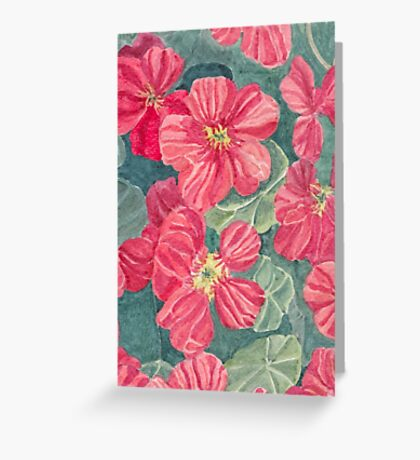 Nasturtium flowers Greeting Card