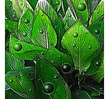 Canna Leaves Photographic Print