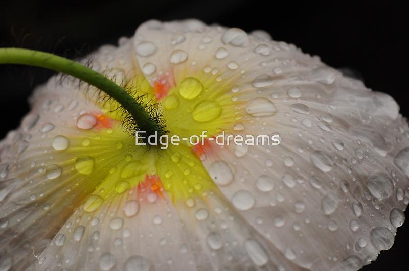 Poppydrops by Edge-of-dreams