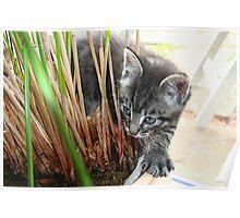 Charlie Tahiti Kitten Poster