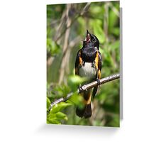 With a Song in his Heart  - Redstart Greeting Card