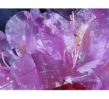 shiny purple flower and rose Photographic Print