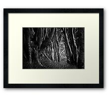 Forest Highlight - Isle of Mull Framed Print