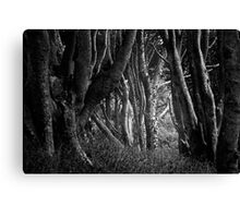Forest Highlight - Isle of Mull Canvas Print