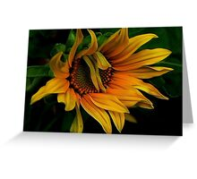 I Need A Comb ! Greeting Card