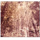 Tree dream 2 by jamesataylor