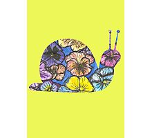 Pansy Snail Photographic Print