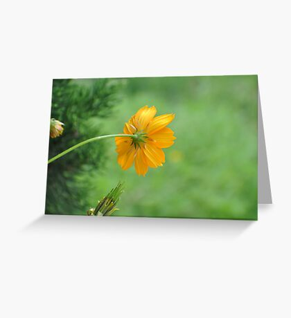 Can you scratch my back please. Greeting Card