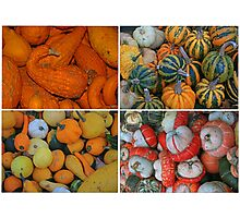 Squashes and Gourds Photographic Print