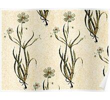 Flower fresco Poster