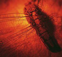 Beauty in the Breakdown - Red by Maliha Rao