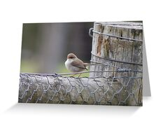 female blue wren on post Greeting Card