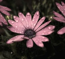 Wet Flowers Old Effect by davesphotographics