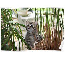 Jimmie Maui Kitten Poster