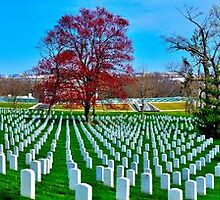Arlington National Cemetery by thegforcers