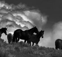 High On A Lonely Hill  by Jeanne  Nations