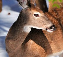 Snow Deer by thegforcers
