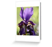 Beautiful Iris Greeting Card