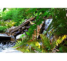 Resting by the Waterfall Photographic Print