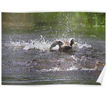 Splashing Around Poster
