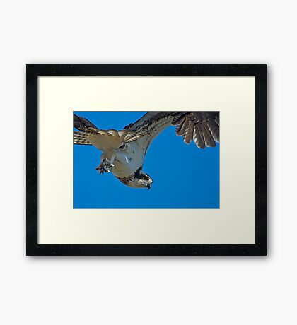 Close Encounter of the Avian Kind  Framed Print