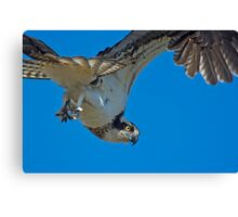 Close Encounter of the Avian Kind  Canvas Print