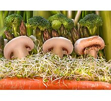 Fun Vegetable Landscape no.4 Photographic Print