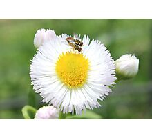 bugs on flower Photographic Print