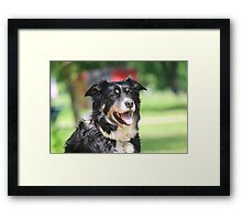 Pup, our  Australian Shepherd  Framed Print