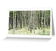White Birch Trees - Flagstaff, AZ Greeting Card