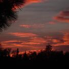 Sunset In The San Bernardino Mountains by Bearie23