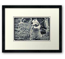 Sitting still Framed Print
