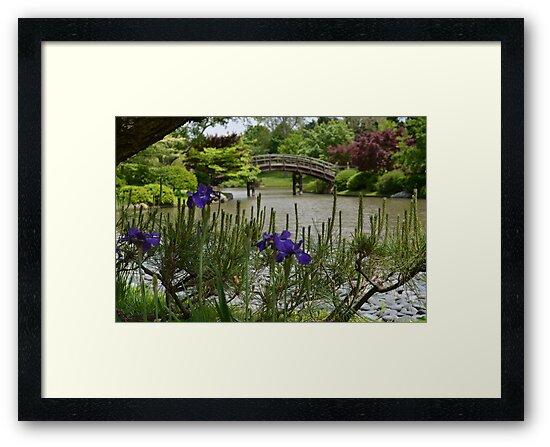 Purple Iris and Pine in Japanese Garden by Paula Betz