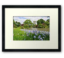 Light purple iris in Japanese Garden Framed Print
