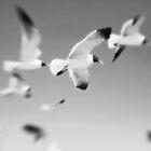 Flight by KatsEyePhoto