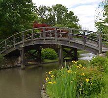 Yellow Irises by the bridge by Paula Betz