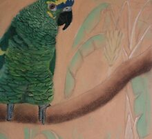 Blue fronted Amazon by Rebecca Lee Means