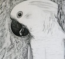 Umbrella Cockatoo in pencil by Rebecca Lee Means