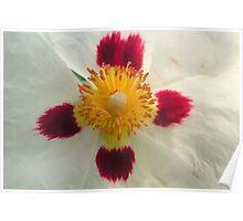 Tissue flower. Poster