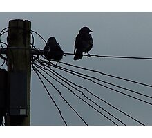 Evening Crows Photographic Print