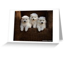Samoyed Puppies Greeting Card